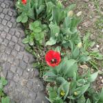 Садовые дорожки из вторсырья