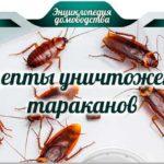 Рецепты уничтожения тараканов