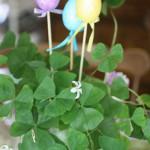 Украшение цветочных горшков