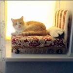 Кошка на подоконнике