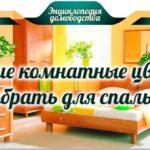 Какие комнатные цветы выбрать для спальни