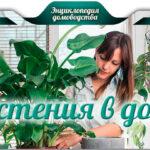 Растения в доме: выбираем и размещаем